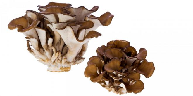 Medicinal Mushrooms Boost Immunity